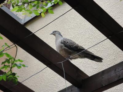 f:id:satoumamoru:20120504115153j:image:w360