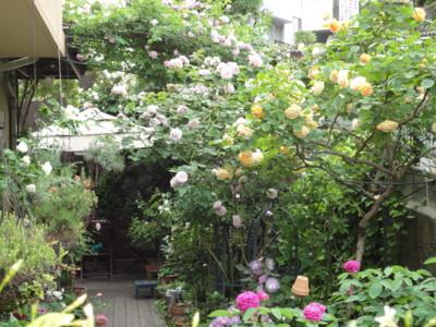 f:id:satoumamoru:20120525074806j:image:w360