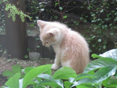 f:id:satoumamoru:20150616122251j:image