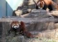 [動物]夢見ヶ崎動物公園