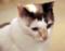 [猫][猫カフェ]