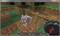 [Minecraft][ゲーム]
