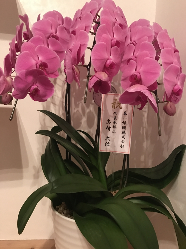 f:id:satoyama-makimaki:20170405235128j:plain