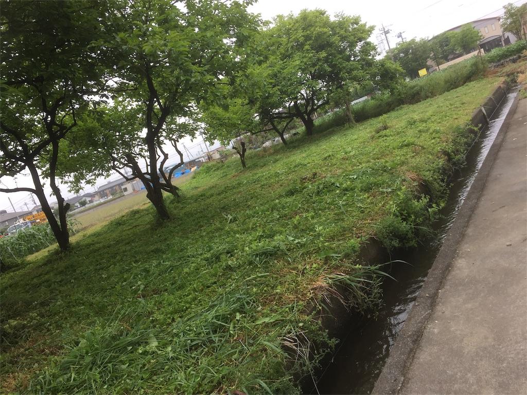 f:id:satoyamajyanaikedoasobu:20170514075935j:image