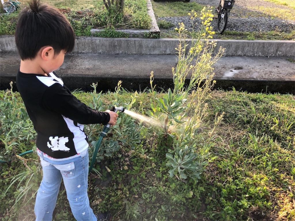 f:id:satoyamajyanaikedoasobu:20180422075710j:image
