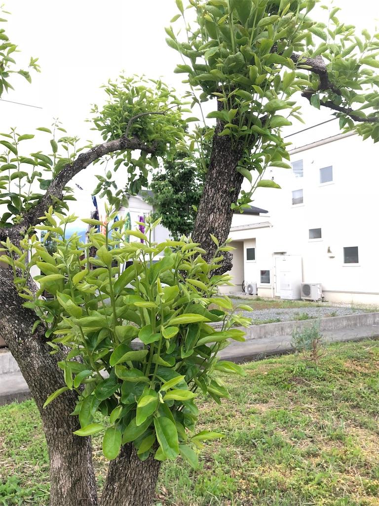 f:id:satoyamajyanaikedoasobu:20180525073158j:image