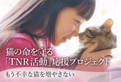 f:id:satoyamanekokun:20190721120331j:plain