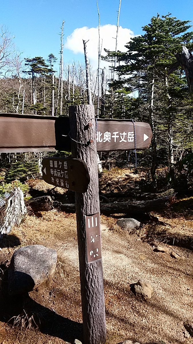 f:id:satoyamanekokun:20201107211822j:plain