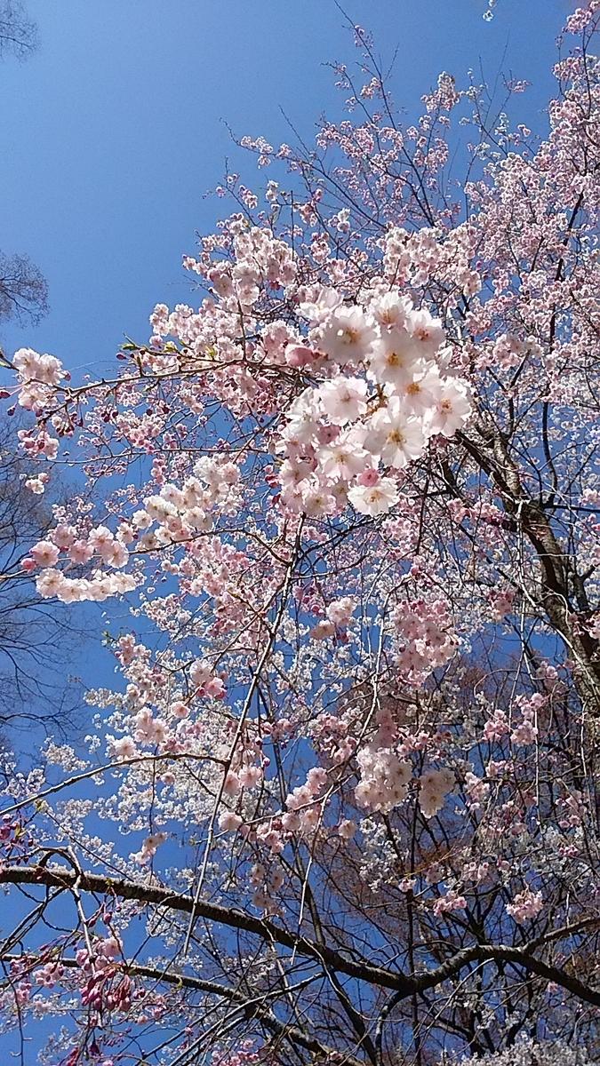 f:id:satoyamanekokun:20210418142349j:plain