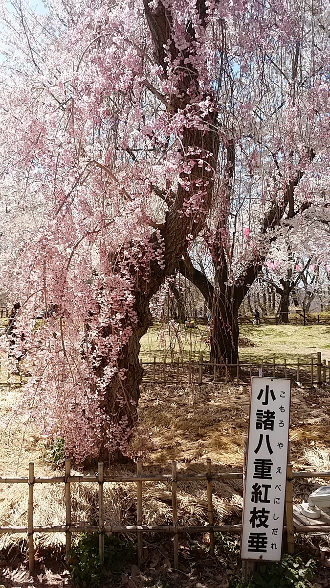 f:id:satoyamanekokun:20210418143606j:plain