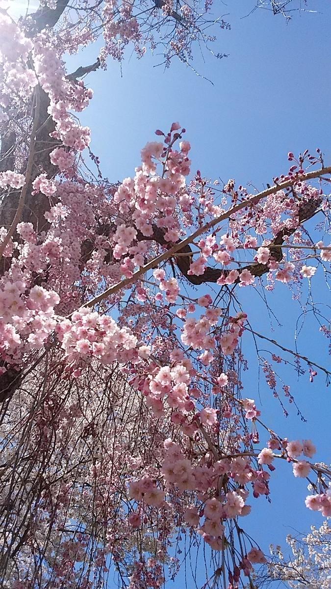 f:id:satoyamanekokun:20210418143652j:plain