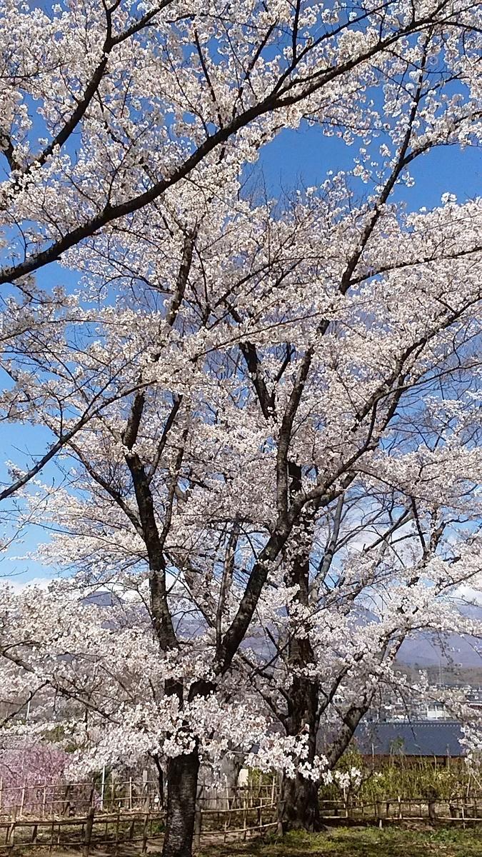 f:id:satoyamanekokun:20210418144055j:plain