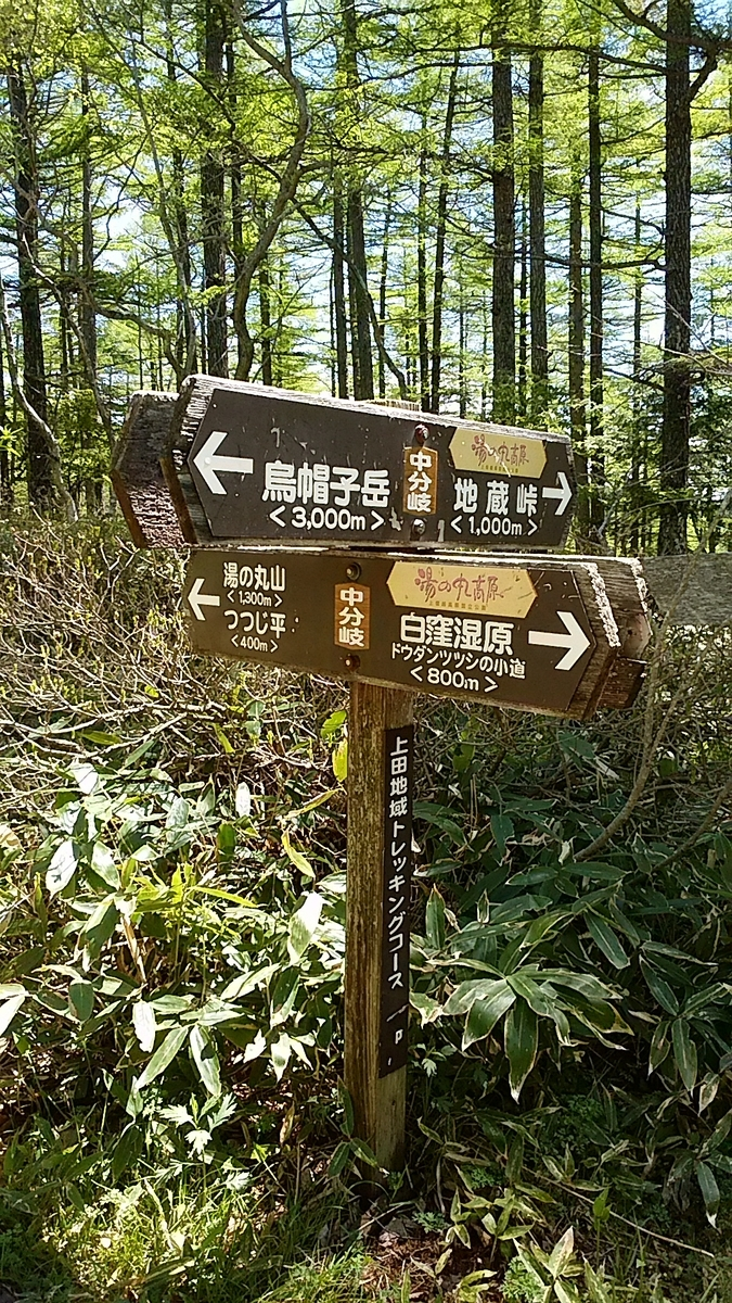 f:id:satoyamanekokun:20210607182243j:plain