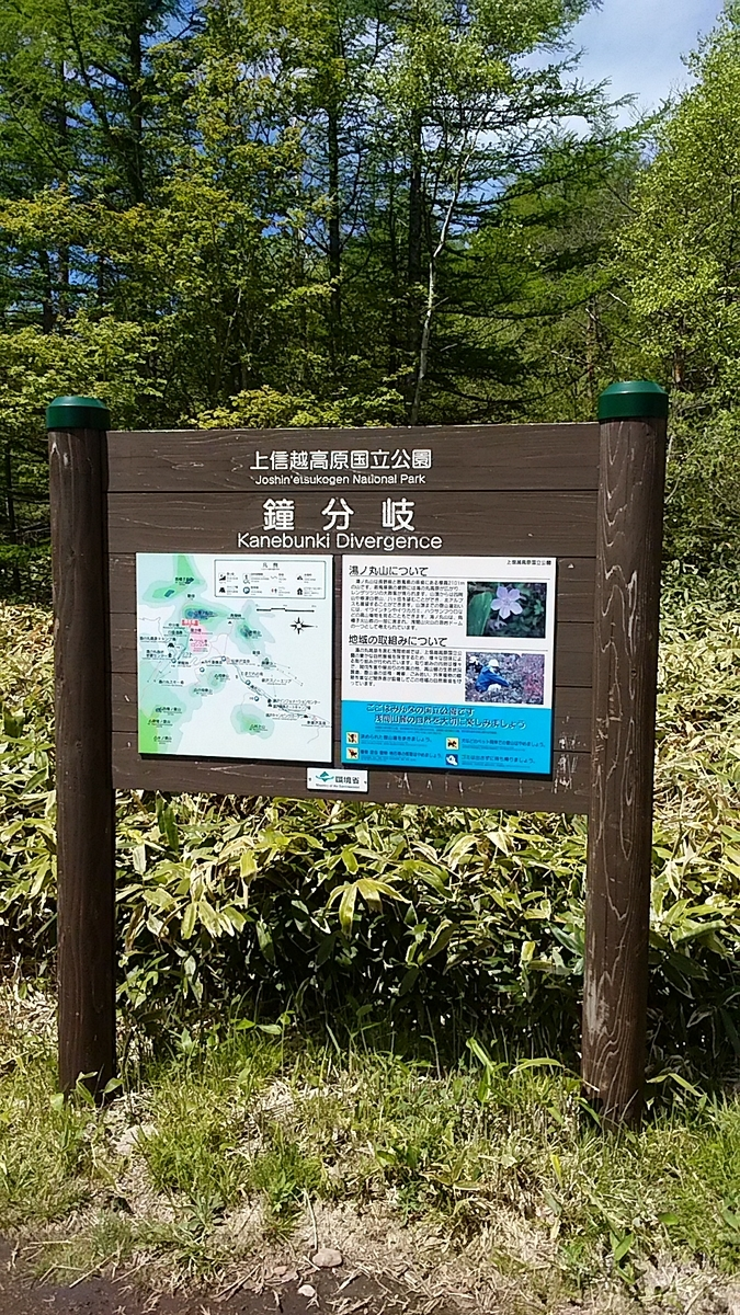 f:id:satoyamanekokun:20210607182341j:plain