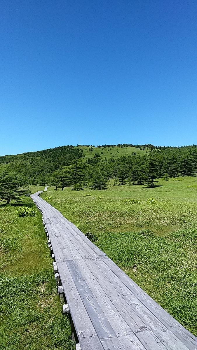 f:id:satoyamanekokun:20210801183536j:plain