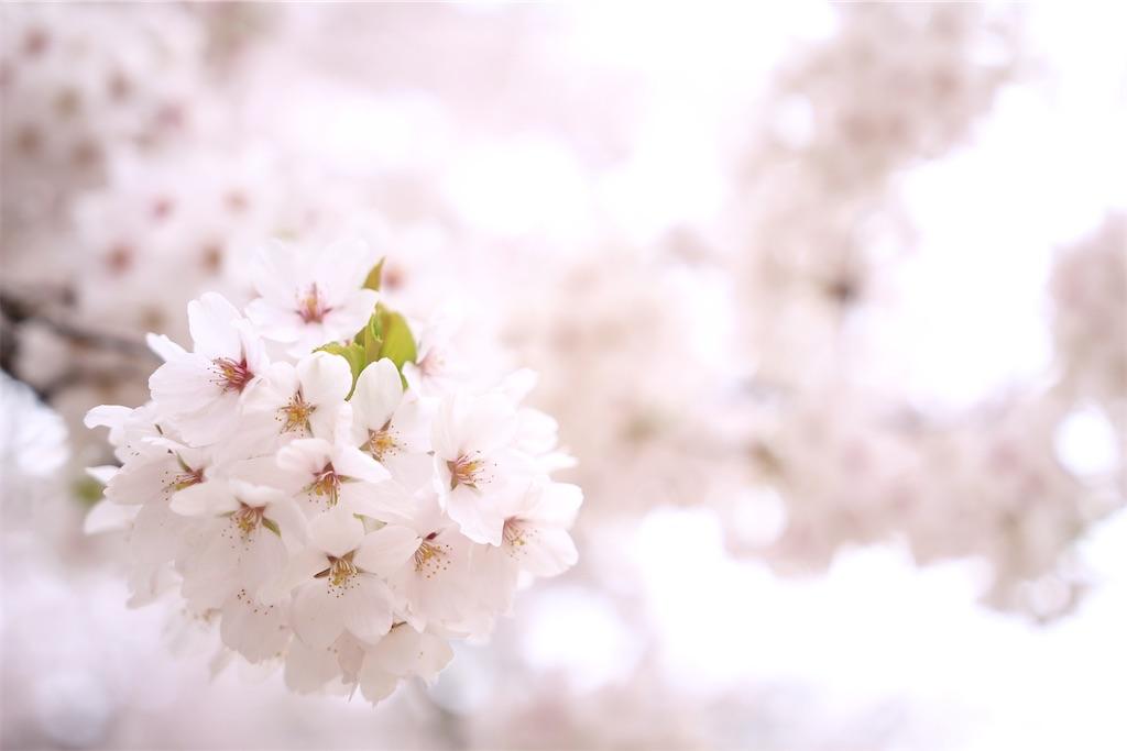 f:id:satoyu323:20200405181319j:image