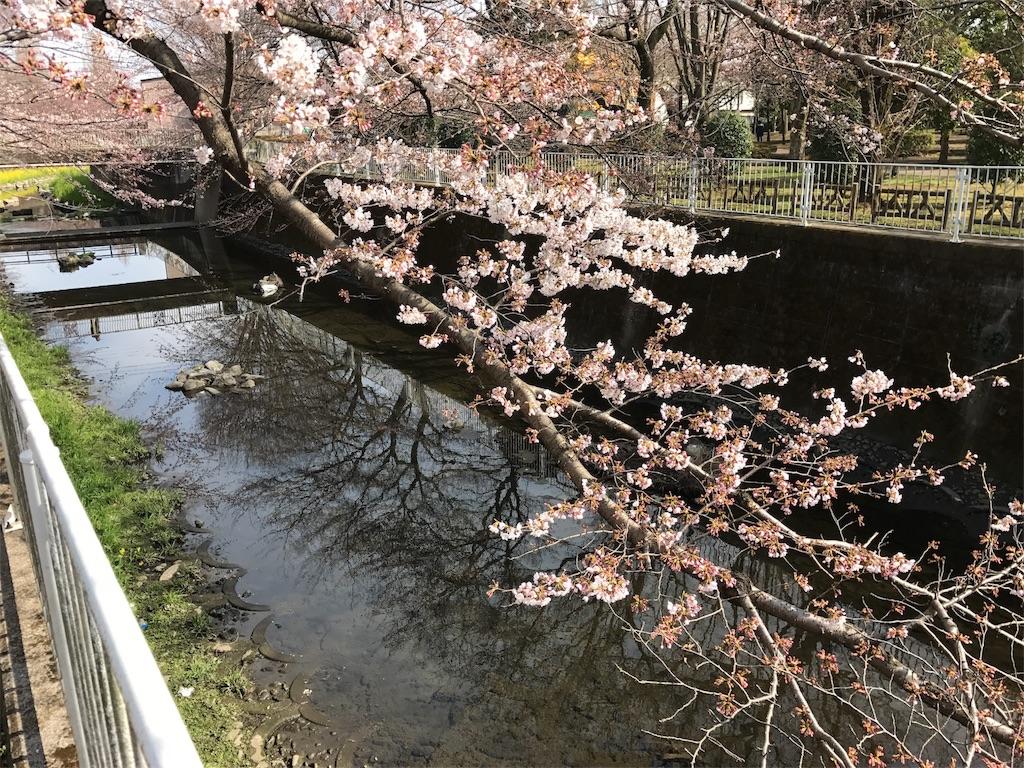 f:id:satsuka1:20170402202633j:image