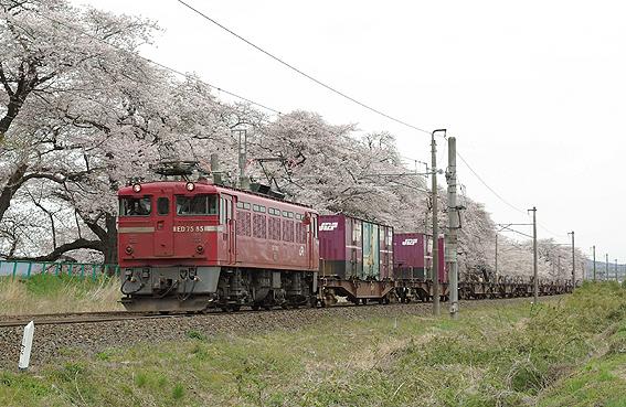 f:id:satsumannoyaji:20070417114838j:image