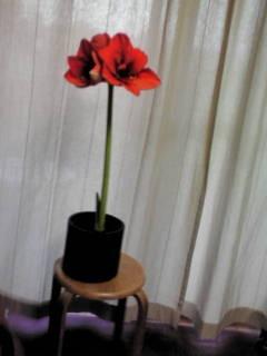 f:id:satyagraha08:20120116141832j:image:w360:left
