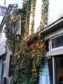 植物に覆われたコインランドリー
