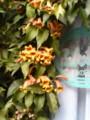 コインランドリーを覆う花