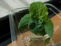 白菜の芯 2016年3月1日