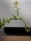 白菜の芯 2016年4月10日