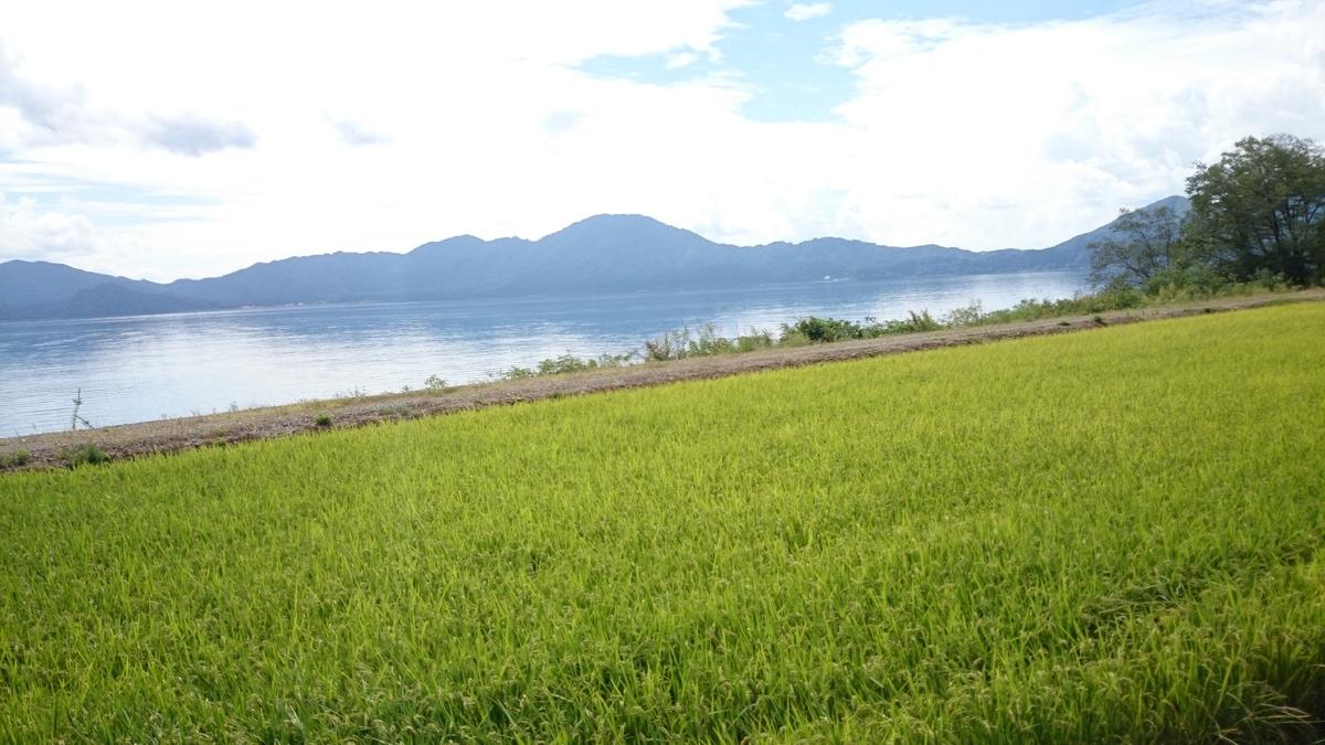 田沢湖 マラソン 2020
