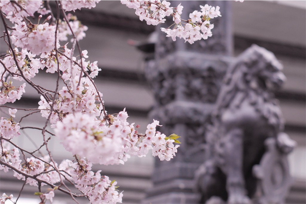 f:id:sawa_goto:20160402225247j:image
