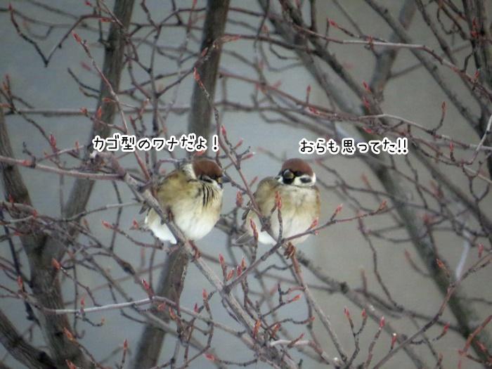 f:id:sawabald:20181213213654j:plain