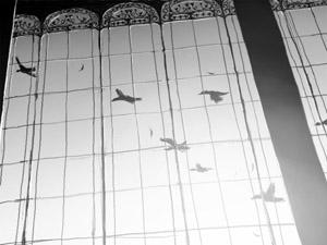 IMG_000380s_migratory-birds