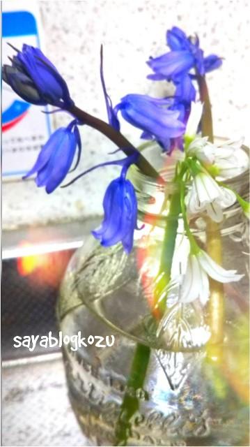 f:id:sayablogkozu:20180401073547j:image