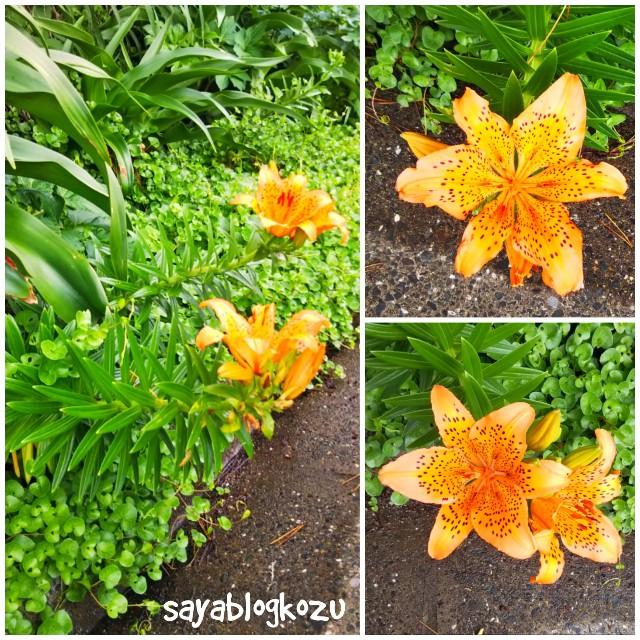 f:id:sayablogkozu:20180611164305j:image