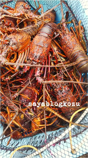 f:id:sayablogkozu:20190130133254j:image