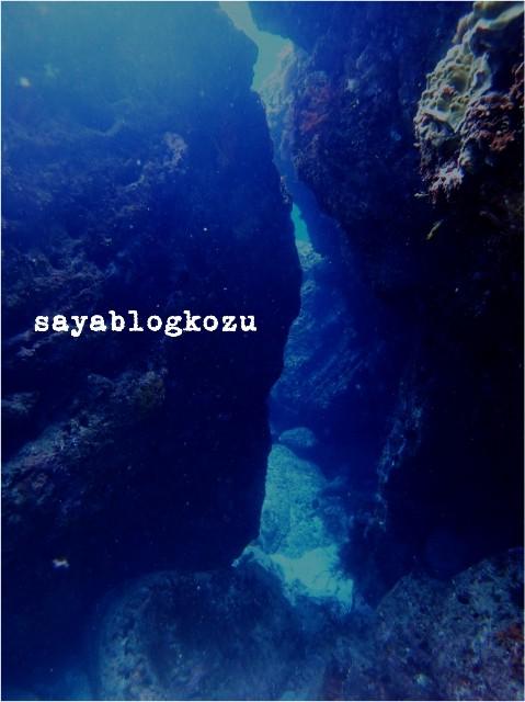 f:id:sayablogkozu:20190918134847j:image