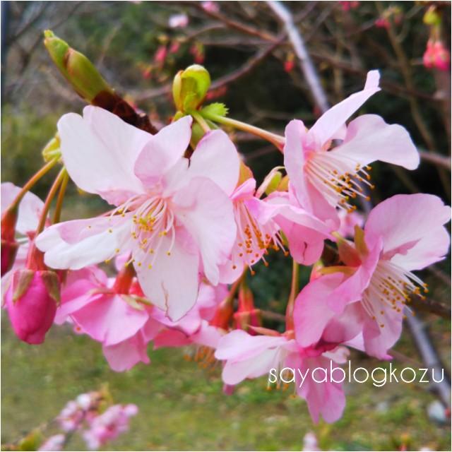 f:id:sayablogkozu:20210405142302j:image
