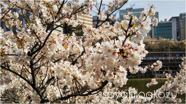 f:id:sayablogkozu:20210405142649j:image