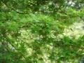 [公園]花博記念公園
