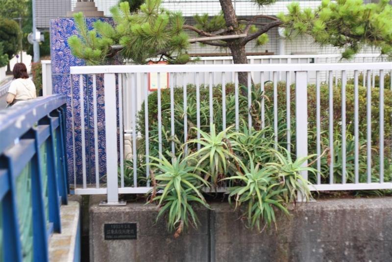 f:id:sayakaloe:20100723182953j:image:w400