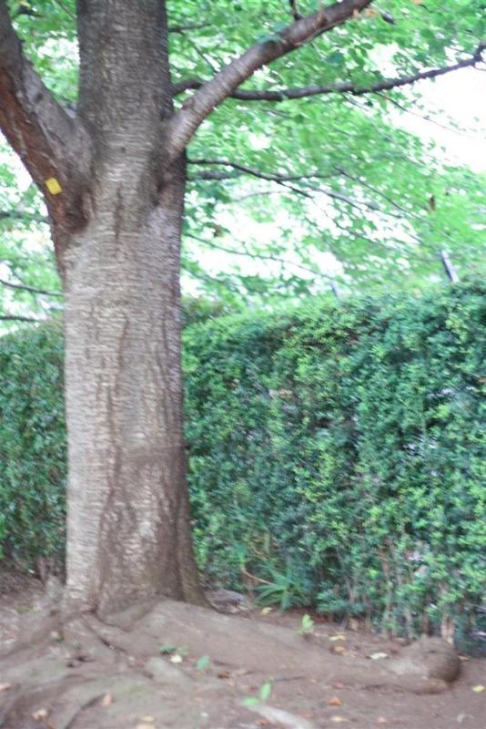 f:id:sayakaloe:20100723183336j:image:w250