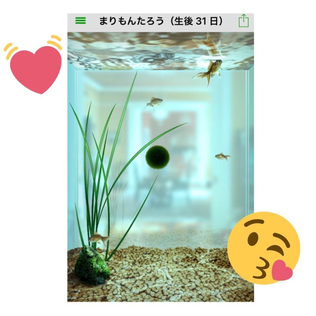 f:id:sayakama1120:20190531102719j:image