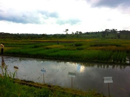 f:id:sayakot:20120520194136j:image:w360