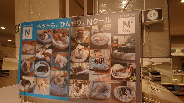 f:id:sayanokuni:20200521164720j:image