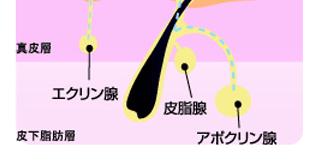 f:id:sayashi:20170119174554p:plain