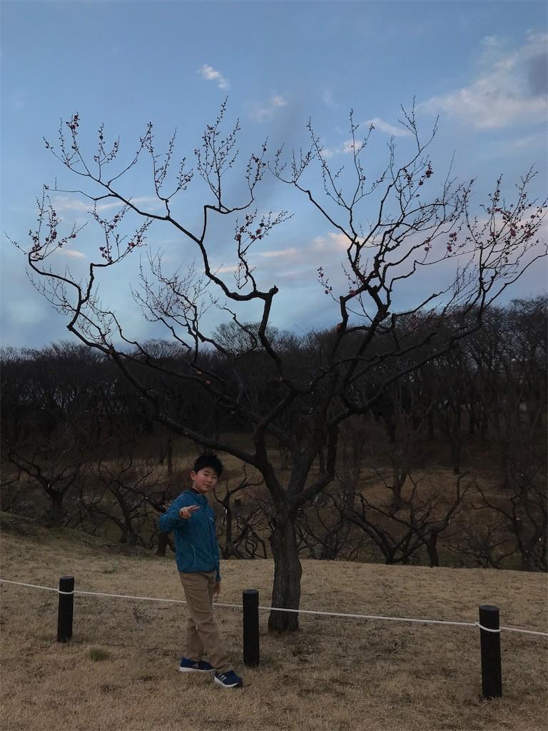 f:id:sayashiyashi:20180131093434j:image