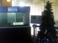 デンキウナギのクリスマスツリー