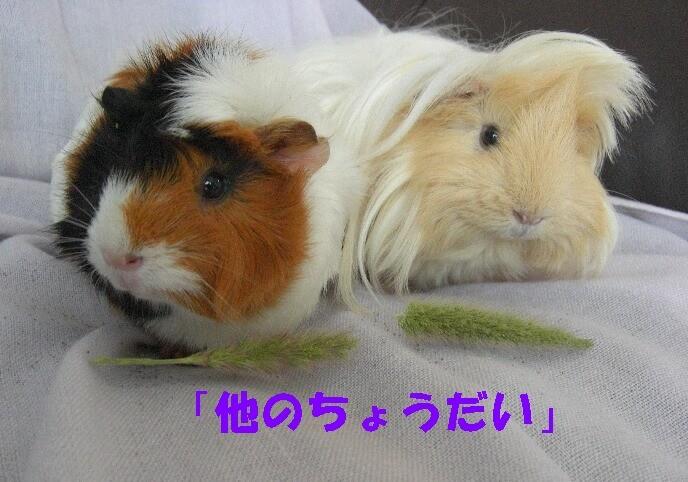 f:id:sayuri_4413:20090725223452j:image