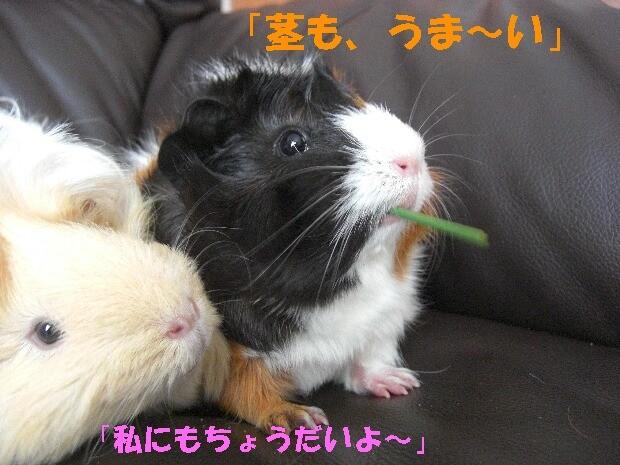 f:id:sayuri_4413:20090802175856j:image