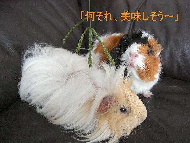 f:id:sayuri_4413:20090802175857j:image