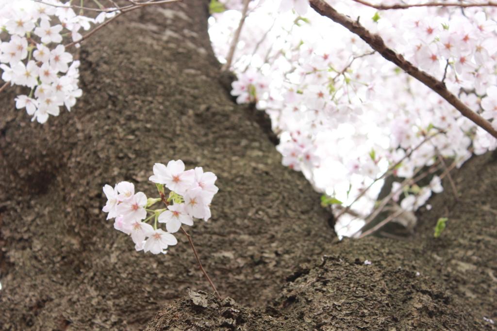 f:id:sayurice:20170411002837j:plain